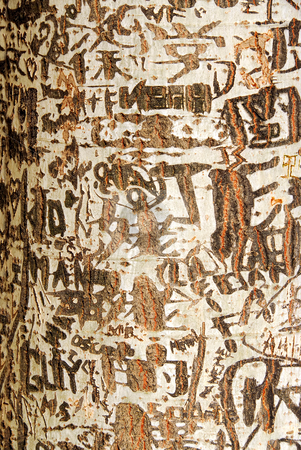 Graffiti stock photo, Abstract background of graffiti on a tree trunk by Elena Elisseeva