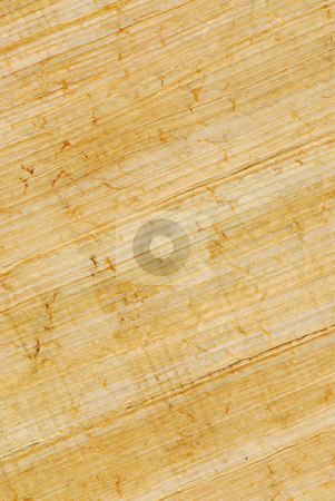 Papyrus stock photo, Natural papyrus background by Elena Elisseeva