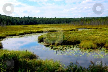 Wetlands stock photo, Wetlands landscape in Algonquin provincial park, Canada by Elena Elisseeva