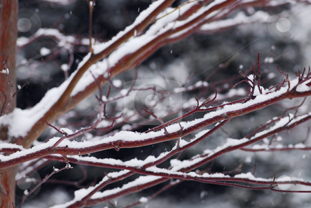 Snow covered branches stock photo, Snow covered tree branches in winter park by Elena Elisseeva