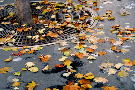 City fall stock photo, Fallen leaves on asphalt sidewalk in the city by Elena Elisseeva