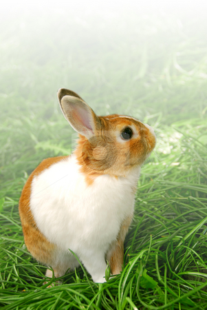 Easter bunny stock photo, Cute easter bunny sitting on green grass outside, faded white background by Elena Elisseeva