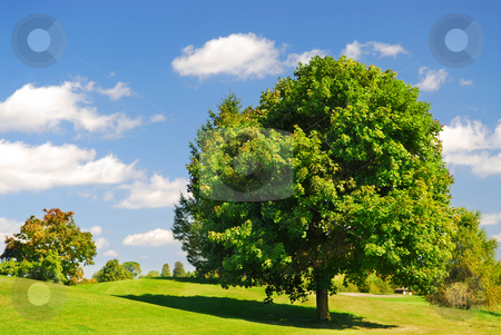 Summer landscape stock photo, Green summer landscape with one leafy tree by Elena Elisseeva