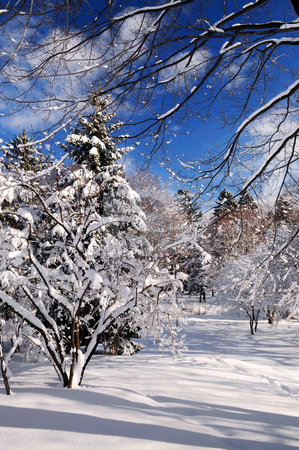 Winter park stock photo, Winter landscape of a sunny park after a heavy snowfall by Elena Elisseeva