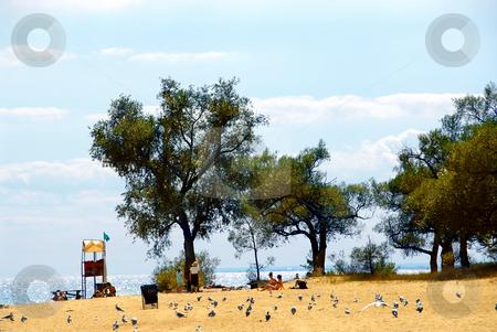 Beach scene stock photo, Beach scene with people, trees and sparkling sea by Elena Elisseeva