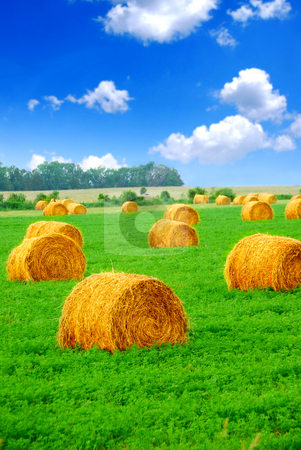 Hay bales stock photo, Agricultural landscape of hay bales in a green field by Elena Elisseeva