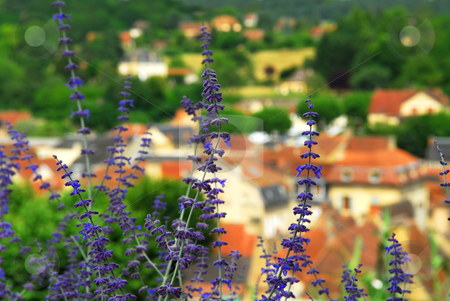 Rooftops in Sarlat, France stock photo, Red rooftops of medieval houses in Sarlat (Dordogne region, France) with blue flowers in foreground by Elena Elisseeva