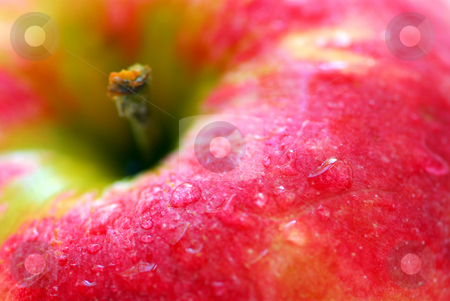 Red apple stock photo, Macro of red apple with water droplets by Elena Elisseeva
