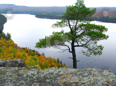 Lake scenery stock photo, Scenic view of a lake and lone pine tree  in Algonquin provincial park Ontario Canada from hill top by Elena Elisseeva