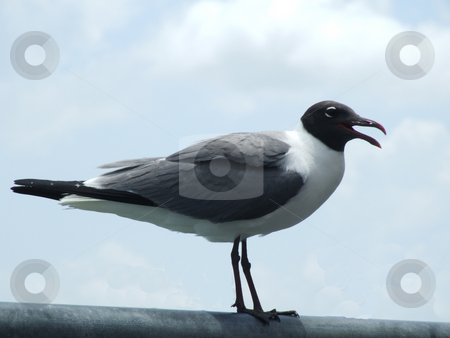 Sea Bird stock photo, Seagull perched on metal rail by Marburg