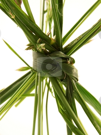 Grass Knot stock photo, Pieces of different types of grass, tied together in a knot. by Jill Oliver