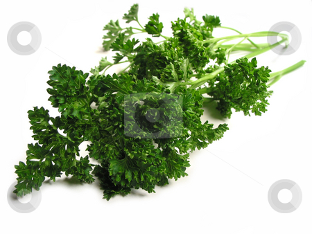 Fresh parsley on white background stock photo, Fresh bright green parsley closeup isolated on white background by Elena Elisseeva