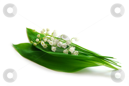 Lily-of-the-valley on white stock photo, Lily-of-the-valley on white background by Elena Elisseeva