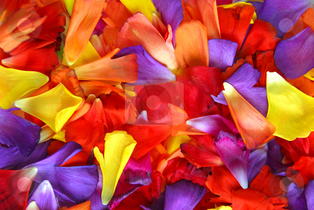 Flower petal background stock photo, Background of colorful flower petals by Elena Elisseeva