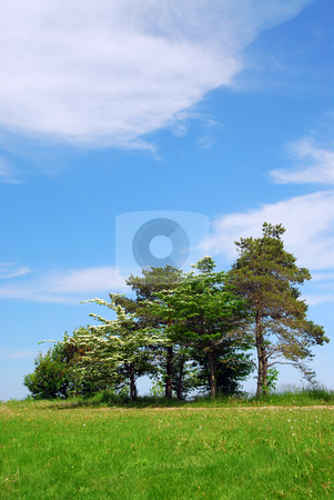 Summer landscape stock photo, Summer landscape with several trees and blue sky by Elena Elisseeva