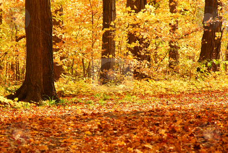 Fall forest stock photo, Scenic view of colorful forest in the fall by Elena Elisseeva