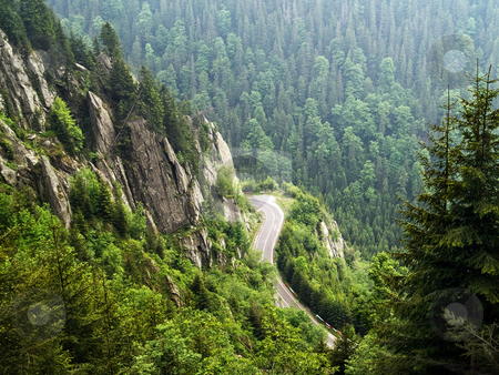 Forest on mountain stock photo, Forest on cloudy mountains in a summer day by Adrian Costea