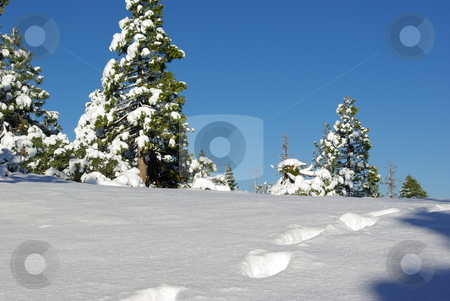 Foot Prints In Fresh Snow stock photo, Foot prints through fresh sparkling snow on a ridge top. by Lynn Bendickson