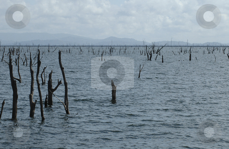 Lake Afobaka stock photo, Lake afobaka in Surinam with the stakes that are typical for the lake. by Claudia Van Dijk