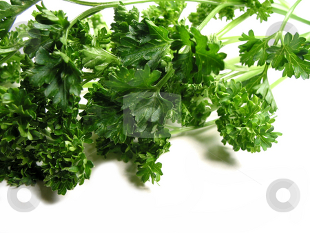 Fresh parsley on white background 2 stock photo, Fresh bright green parsley closeup isolated on white background by Elena Elisseeva