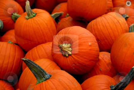 Pumpkins stock photo, Bright orange cooking pumpkins for sale by Elena Elisseeva