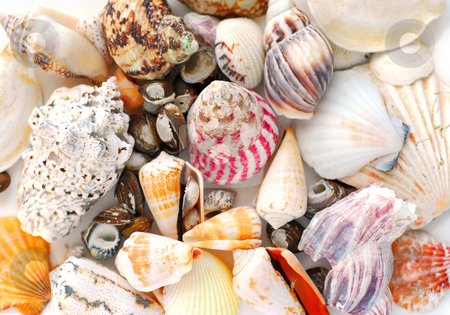 Sea shells background stock photo, Assorted sea shells background by Elena Elisseeva