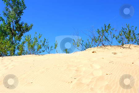 Sand dunes stock photo, Landscape of sand dunes with clear blue sky by Elena Elisseeva