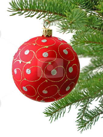 Red Christmas ball stock photo, Red Christmas ball on Christamas tree branch isolated on white background by Elena Elisseeva