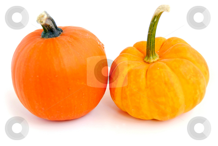 Mini pumpkin stock photo, Two mini pumpkins on white background by Elena Elisseeva