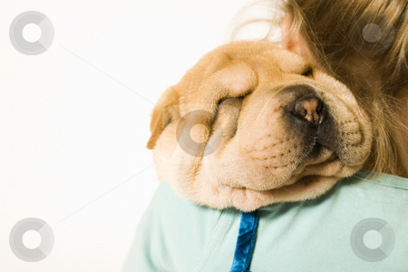 Loving my puppy stock photo, Young girl holding a sharpei pup on her shoulder sleeping by Frenk and Danielle Kaufmann