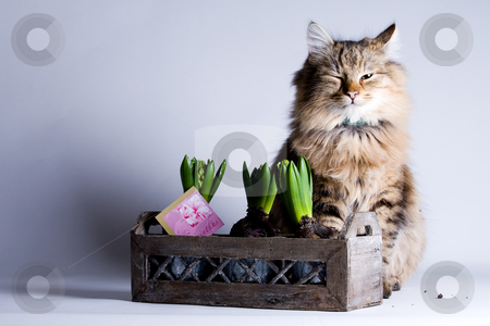 Young cat and a flower stock photo, Young beautiful cat is sitting behind a flower by Frenk and Danielle Kaufmann