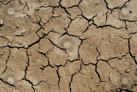 Dry soil background stock photo, Cracked soil  background by Elena Elisseeva