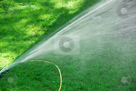 Sprinkler on lawn stock photo, Sprinkler watering lawn by Elena Elisseeva
