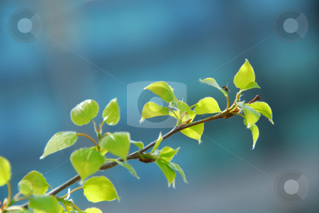 Spring leaves stock photo, Young bright green spring leaves by Elena Elisseeva