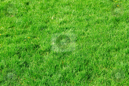 Green grass stock photo, Green grass abstract background lawn spring summer by Elena Elisseeva
