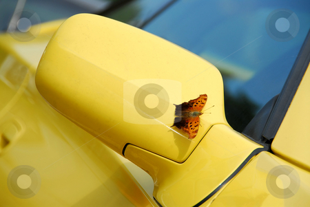 Mirror of yellow sports car stock photo, Side mirror of yellow sports car with butterfly sitting on - it landed just as I was taking the picture by Elena Elisseeva
