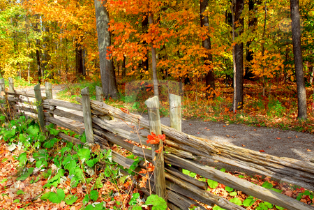 Fall forest stock photo, Scenic view of colorful forest in the fall and country road by Elena Elisseeva