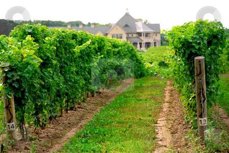 Vineyard stock photo, Vineyard and winery by Elena Elisseeva