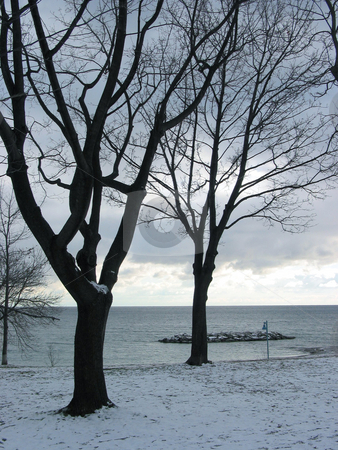 Winter trees on lakeshore stock photo, Black silhouettes of leafeless winter trees on the background of steel blue sky and lake by Elena Elisseeva