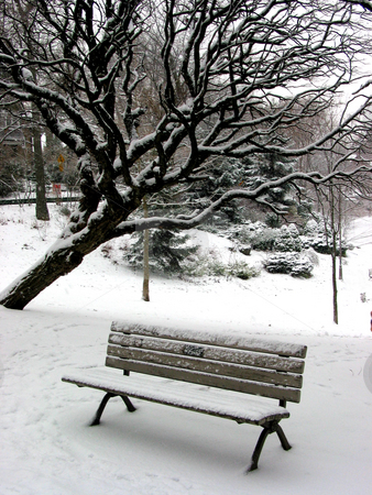 Winter bench 1 stock photo, Winter bench in a park covered with snow, under a tree. Big snowflakes falling are seen at full size. by Elena Elisseeva