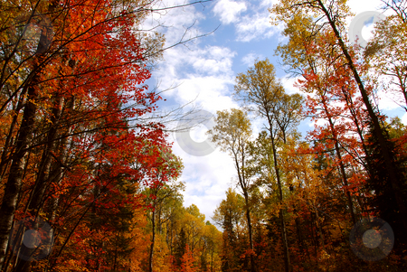 Fall forest stock photo, Colorful forest in the fall by Elena Elisseeva