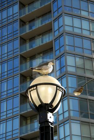 City life stock photo, Modern city life by Elena Elisseeva
