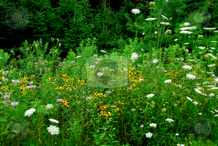 Wildflowers stock photo, Blooming wild flowers in green summer forest by Elena Elisseeva
