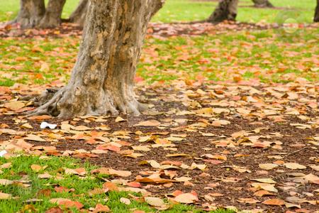 Fallen leaves stock photo, Autumn scene of a tree trunk and fallen leaves by Jose Wilson Araujo