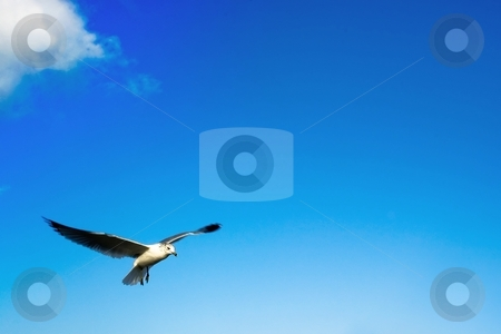 Seagull flying in sky stock photo, Seagull flying in the clouds with a blue sky background by Jose Wilson Araujo