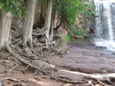 Stubborn Roots Stand Test of Time stock photo, Exposed tree roots of pines in hard packed rocky soil demonstrate how determination can make a difference on a ledge overlooking Gooseberry Falls near northern Minnesota's Lake Superior shore. by Dennis Thomsen
