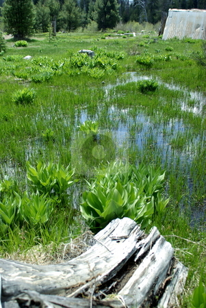 Mountain Meadow In Spring stock photo, A wet high Sierra meadow in springtime. by Lynn Bendickson