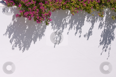 Bougainvilleas Casting Shadow stock photo, Bougainvilleas Casting a Dramatic Shadow. by Andy Dean