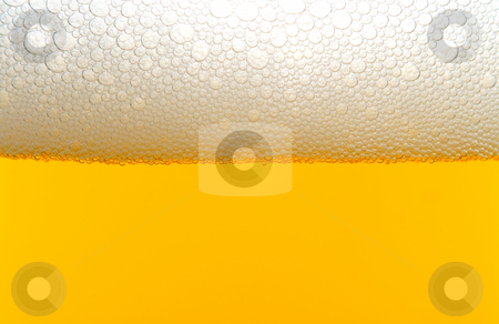Beer stock photo, A close-up image of a beer with a foam head. by Robert Byron