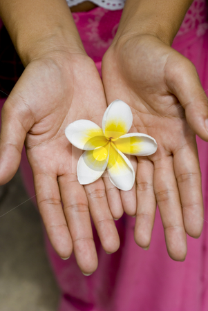 White Flower in Hands stock photo, A white and yellow flower in the hands of a woman by Stefan Breton
